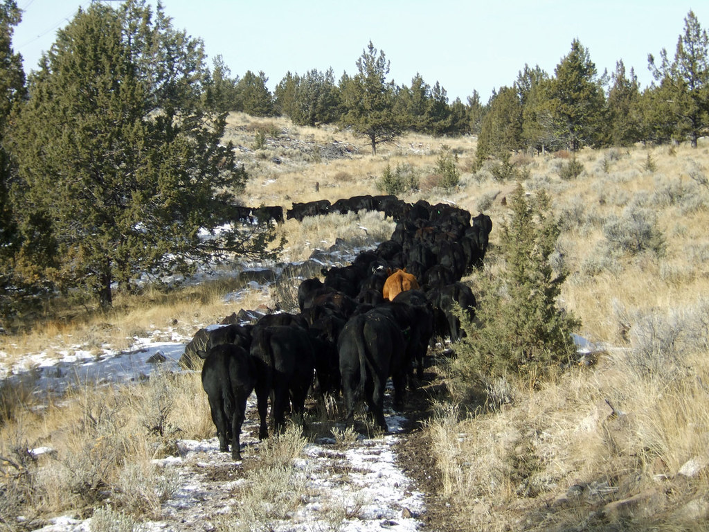Gather & Trail-3