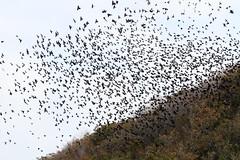 Tree Swallows (sandy richard) Tags: longisland beaches wildwood wildwoodstatepark sandyrichard sandrarichard
