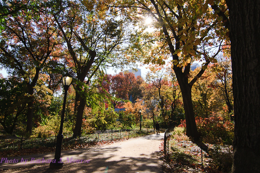 Central Park (6 of 16)