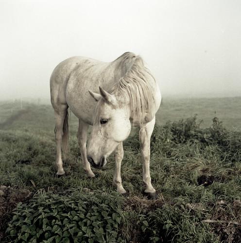 equus by ℓơηą