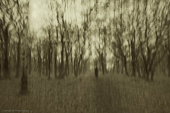 Walk in the forest (Pieter Musterd) Tags: wood motion blur forest photoshop canon movement raw nederland thenetherlands denhaag motionblur bosque 5d nik bos wald paysbas fort foresta zuidholland cameramovement sgravenhage movingcamera colorefexpro  freephotography pietermusterd vrijefotografie photoshopcs4 canon5dmarkii gisellavirus