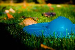 Dog Frisbee (Kimberly Gauthier | Keep the Tail Wagging) Tags: blue dog fall field grass leaves yard frisbee dogtoy dogfrisbee sonyalpha sonyalpha550 throughthelensofkimberlygauthier kimberlygauthier anovicewithmoxie amateurphotographyblog amateurphotographyblogger