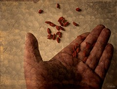 As you sow, so shall you reap (Franco DAlbao) Tags: texture textura lumix hand fingers harvest seeds dedos mano cosecha proverb siembra semillas sowing leicalens proverbio dalbao francodalbao