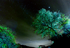 Jupiter over the trees (marcopics3000) Tags: trees sky night stars cielo planets astronomy jupiter astronomia starry notte stelle stellata pianeti giove samyang