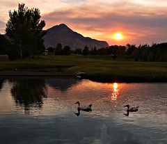 Ducks (Ph0tomas) Tags: trees sunset sky lake newmexico water clouds sunrise reflections river lumix pond wideangle g1 f4 714 vario landofenchantment colorphotoaward mygearandme mygearandmepremium mygearandmebronze ringexcellence ph0tomas
