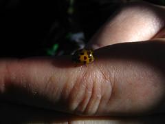 Chinita en mi mano (halasdelalma) Tags: cactus chinita parasito pochoco quintral