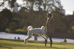 Glowing Poodle and Hipster Chick (Oatsandsugar) Tags: park portrait centennial picnic sydney hipster halo poodle goldenhour canoneos5d 70200mmf28 weekendclub