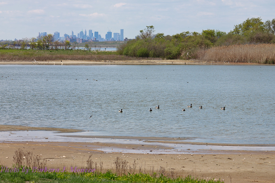 Jamaica Bay National Wildlife Refuge (8 of 24)