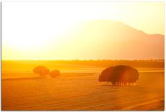 (Antonio Carrillo (Ancalop)) Tags: espaa tree field canon arbol spain europa europe mark andalucia ii campo 5d lopez antonio almeria carrillo trigo 70200mm ancalop 70200lmmf4