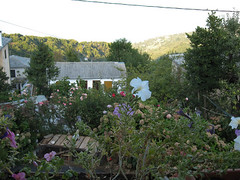 IMG_1035 (Kalikalos - Retreat centre on the Mount Pelion) Tags: yoga greece retreat meditation pelion workshops osho rawfood holistic vipassana selfdevelopment helenford fkit kalikalos olistico jockmillenson