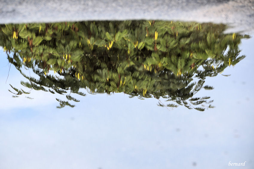 Flaque de pluie.reflets.2