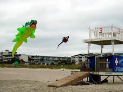 Kites at Desoto