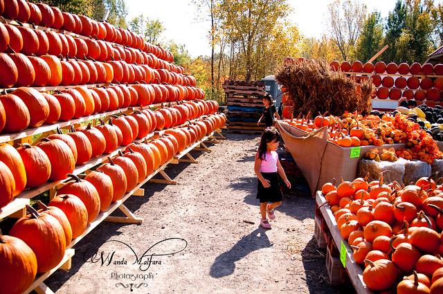 Pumpkins 154