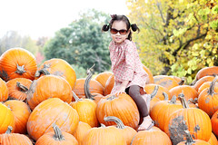 miller's farm, pumpkin patch