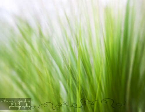 spring abstract_8
