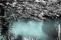 ...e più in la ,si sentiva il profumo del riso tagliato... and the more he felt the smell of cut rice ... (UBU ♛) Tags: blue blancoynegro water blackwhite noiretblanc blu blues bleu dreams biancoenero blunotte blureale bluacqua ©ubu blutristezza unamusicaintesta landscapeinblues bluubu luciombreepiccolicristalli bluriso
