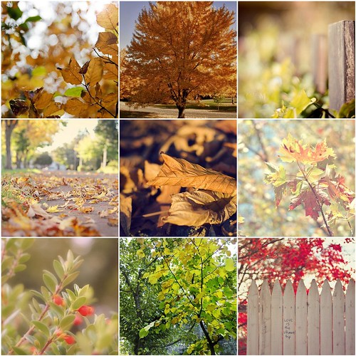 El otoño visto por mis contactos de flikcr. by Carola (Soñando cambios)
