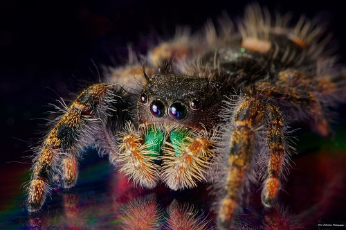 Colorful jumping spider - photo#51