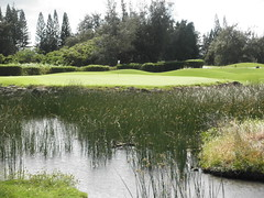 Turtle Bay Colf Course 301