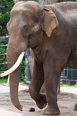 Elephant (djmdjmdjm) Tags: iso200 noflash f56 105mm aperturepriority 105mmf28 nikond90 centerweightedaverage sec ev subjectdistance 157mmefl