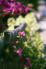 First of Nov (The Walkin' Dead) Tags: zeiss flora sydney nsw manualfocus enmore zeiss135