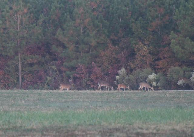 deer01