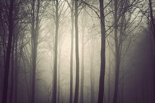 photography,fog,forest-fa8b42e1c4c35f0e2759c60001654e43_h