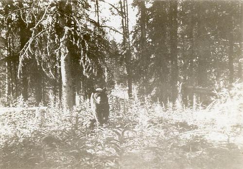 bear, alaska, WWII