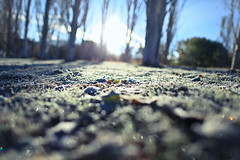 Wherever You Are (Standard Deluxe) Tags: autumn tree grass leaf frost 24mm 24l canonef24mmf14liiusm