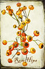 Rose Hips (shreya59) Tags: red texture beauty jones postcard jerry rosehips imageourtime kimklassen