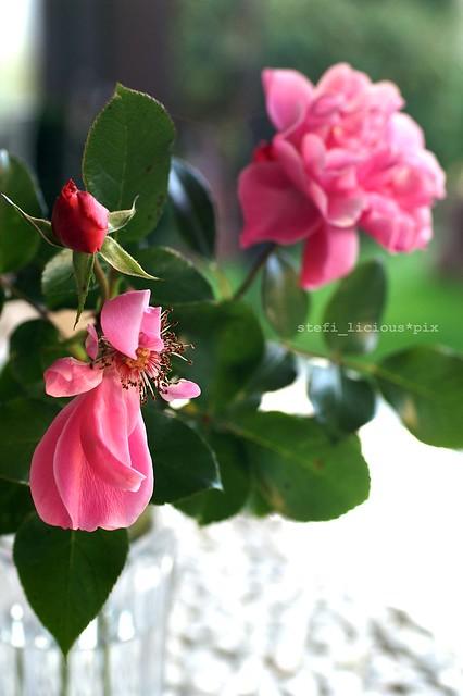 03_last_roses