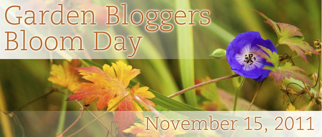 GBBD_November 2011