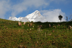 Snowy peaks, Berner Oberland, Switzerland