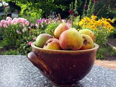 Die Kleinen Petersbirnen (happycat) Tags: fruit germany thringen pear frucht birne obst shk pyrus saaleholzlandkreis mitregina beireginasschwester beibritta petersbirne
