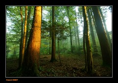 premire lumire dans la foret ** first light in the forest ** (francky25) Tags: light forest la lumire first foret dans premire doubs comt franche alaise