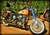 Sweet Harley Fat Boy (Alex88 - Profile updated please read) Tags: harley motorcycle safe