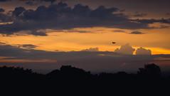 Flying towards the sun (Luuk de Kok) Tags: sunset sky orange cloud storm hot bird heron silhouette clouds zonsondergang warm wolken zon cloudporn reiger vogel heide donker goirle heet scarluuk