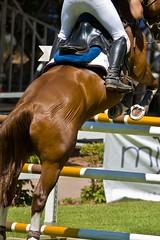 _HSC6618_bis_32_Coppa_degli_Assi_Palermo (Vater_fotografo) Tags: palermo cavalli cavallo sicilia equitazione saltoostacoli nikonclubit coppaassi vaterfotografo