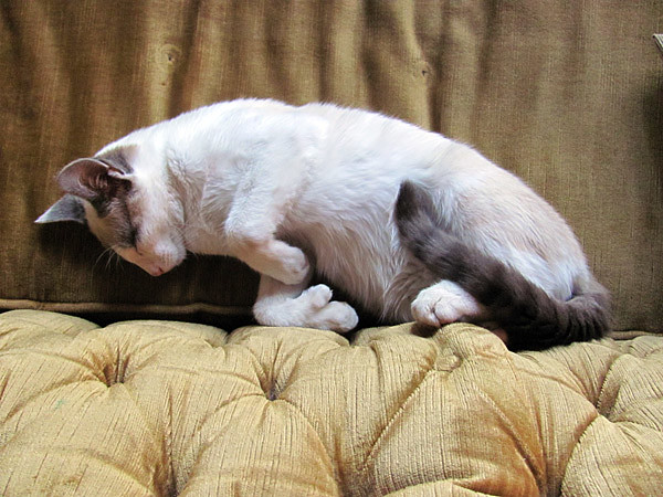 L'art de la sieste :: The art of napping
