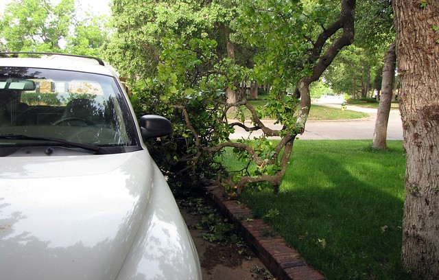 Tree Near Car 3