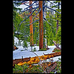 _DSC6661_4_7_9 (tim, TimCooperPhotos.com) Tags: landscape flickr laketahoe northamerica printed timcooper