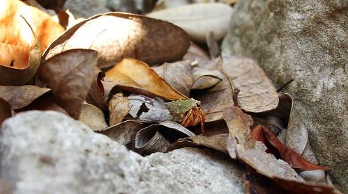 Baby Hermit Crab by amandaschroeder