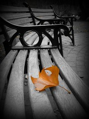 the lonely leaf...... Explore #12 (pics by paula) Tags: park uk autumn england bw orange brown white black color colour english fall by canon bench leaf maple europe european photographer pics britain seat surrey powershot paula fourseasons single lone british amateur vignette autumnal selective 4seasons g12 thelonelyleaf