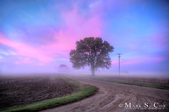 Another Beautiful Sunrise (mctuba) Tags: pink blue tree nature fog clouds sunrise colorful lone