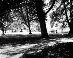 . (life outside the fish bowl) Tags: park trees shadow people blackandwhite bw tree bn devon devonshire totnes southhams vireisland lifeoutsidethefishbowl
