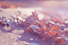Lavender morning (m i c h e l e j e n s e n [photography]) Tags: morning pink autumn light orange fall leaves soft bokeh lavender dreamy