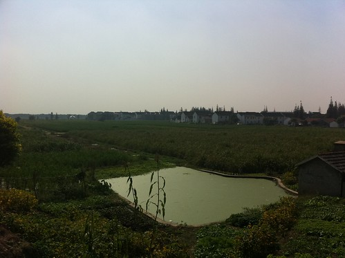 Rice fields on the inside of the dike, with a village in the background