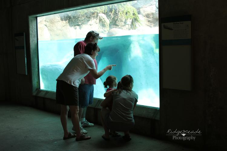 NC Zoo #59