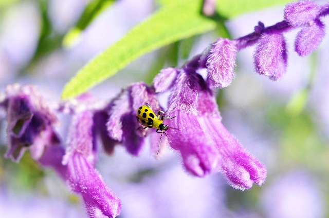 bug on purple