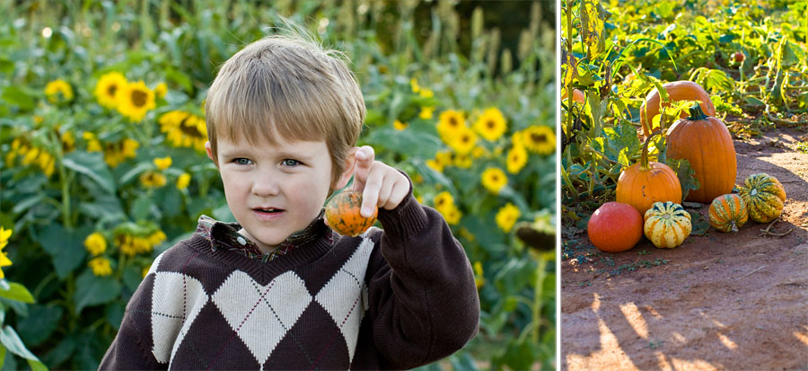 Storyboard 3 Best child family photographer in charlotte huntersville Concord Kannapolis pumpkin patch photography